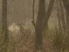 Cerf ambiance brouillard